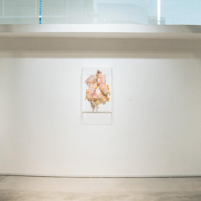 Mind(less) Wilderness - Miaja Gallery (9)